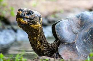 Encounters with giant Galapagos tortoise on Santa Cruz island