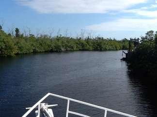 Mangrovenwälder von Jardines de la Reina Nationalpark