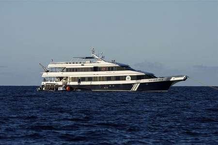 Schiffsreisen zu den Buckelwalen in den Silverbanks Dominikanische Republik