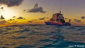 Shearwater - Bahamas